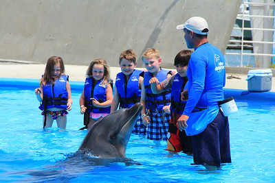 Cabo Dolphins 2